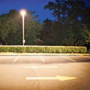 Les insectes influencés par l'éclairage nocturne