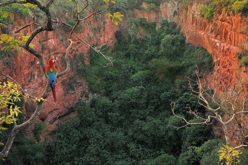 Près de Bonito, dans le Pantanal (côté Mato Grosso do Sul), le site de Buraco das Araras est le sanctuaire des oiseaux rares.