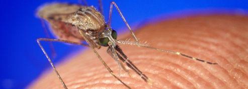 Voyageurs, attention au paludisme
