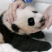 Télé Panda fascine les Thaïlandais
