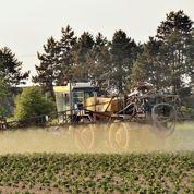 Les pesticides réduisent les capacités cognitives