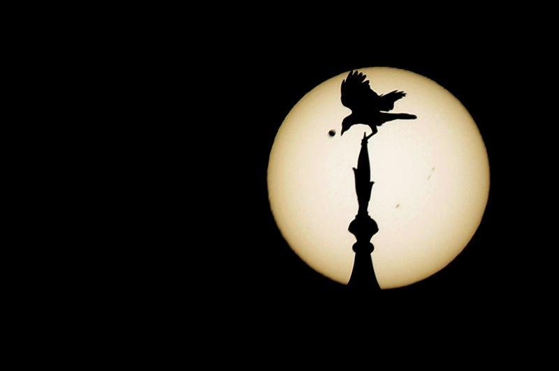 Un oiseau posté au sommet d'une des coupoles du Taj Mahal, situé à Âgrâ en Inde.