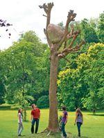 Dans le parc de Karlsaue, l'Italien Giuseppe Penone a planté Idea di Pietra, 2003, son arbre de bronze sur lequel est perchée une roche.