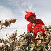 Chine : le coton OGM profite aux coccinelles