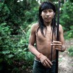 La forêt des Awá est abattue en toute illégalité à un rythme alarmant. / © Survival International