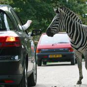 Détournement de fonds au zoo de Thoiry