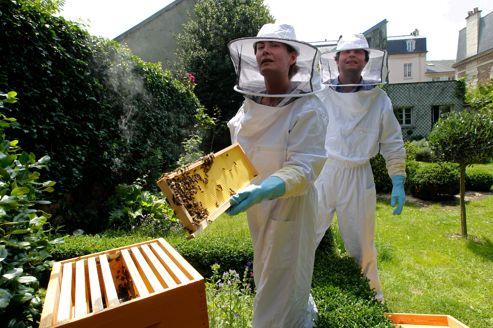 Les ruches bourdonnent en Ile-de-France