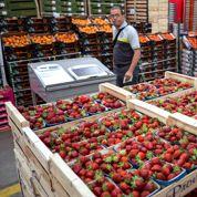 Fruits : des alertes mais pas de catastrophes