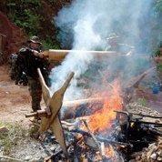 En Guyane, la guerre contre les orpailleurs