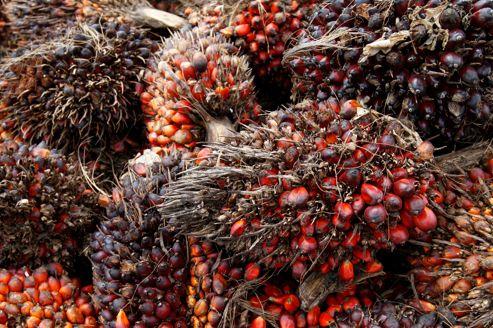 Huile de palme: colère des producteurs contre Système U