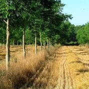 La France replante des arbres dans ses champs