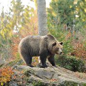 Les Pyrénées, le pays qui a vu l'ours