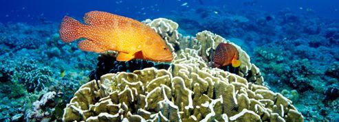 M lanome chez des poissons la couche d 39 ozone et les u v en cause l 39 atelier actualit s - Couche d ozone en anglais ...