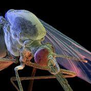 Laveran lève le mystère du paludisme