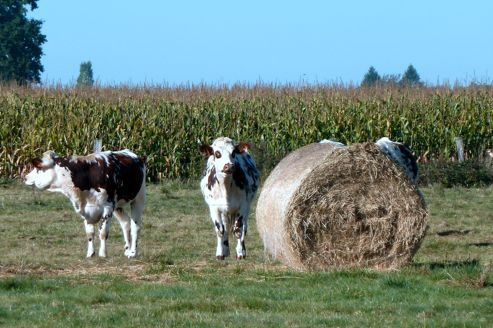 Le nombre d'exploitants agricoles a encore baissé