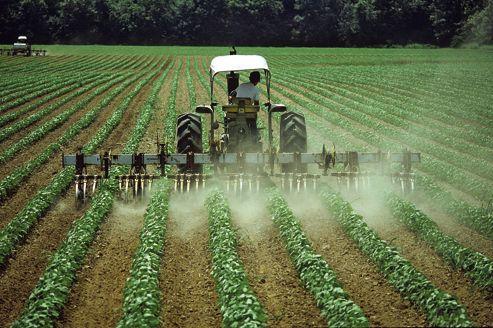 Opération de désherbage dans un champ de soja. Cette culture est la cinquième au monde par ordre d'importance.