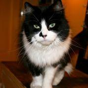 Cancer du cerveau: les chats accusés à tort