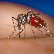 La menace du moustique tigre s'étend
