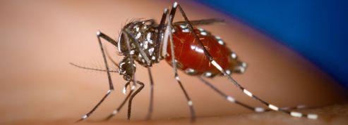 Le moustique poursuit sa progression en France