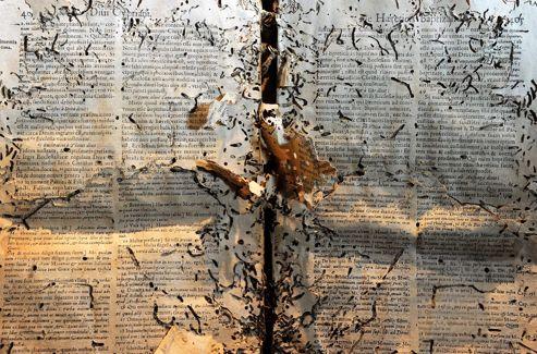On croit être devant une toile moderne... mais c'est un manuscrit du XVIIIe siècle envahi par des coléoptères dont la prolifération a été favorisée par la chaleur et l'humidité.