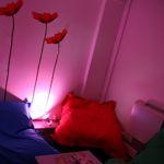 La salle de sieste de Novius peut accueillir jusqu'à quatre employés. Crédit: Novius