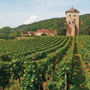 Peur sur la vigne à Gevrey-Chambertin