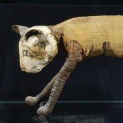 L'Égypte, berceau de la domestication du chat