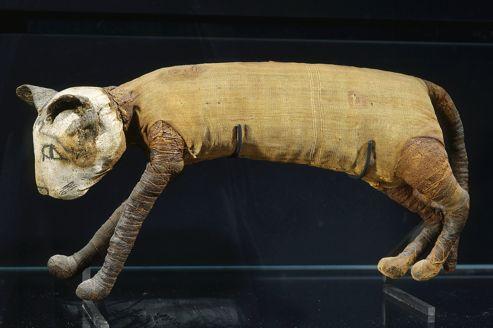 Momie de chat d'époque ptolémaique au musée du Louvre.