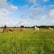 À la découverte de la Brenne à cheval