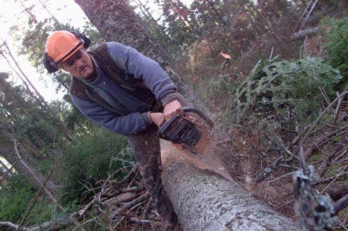La France veut relancer l'exploitation de sa filière bois