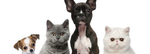 Chiens et chats : objectif zéro parasites !