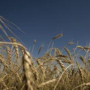 Paris rivalise avec Chicago dans le blé