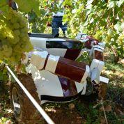 VIN, le premier robot tailleur de vignes
