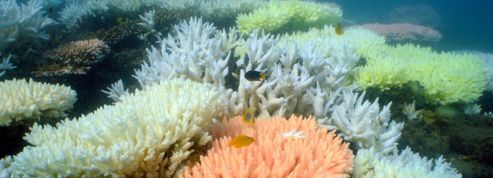 Diminution de moitié de la grande barrière de corail