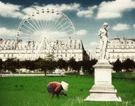 Une rizière aux Tuileries en 2037?