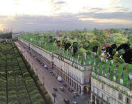 Pour lutter contre l'étouffement de la ville, la rue de Rivoli se transforme en strate verte.