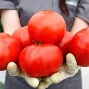 La tomate, nouvelle arme contre les AVC