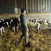 La grogne monte chez les éleveurs laitiers