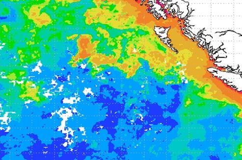 De hauts niveaux de chlorophylle, caractéristiques de la présence de phytoplanctons, sont visibles en orange au centre de cette vue satellite de la Nasa prise peu de temps après l'expérience de géo-ingéniérie au large du Canada.