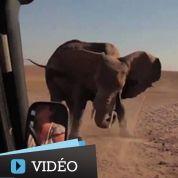 Le sauvetage émouvant d'un éléphanteau