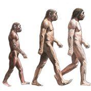 L'homme continue-t-il à évoluer?