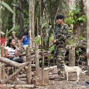 Sept millions en pépites d'or venus de Guyane