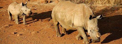 Un artiste poste ses ongles de pied pour défendre les rhinocéros