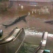 Sandy : Twitter inondé de fausses informations