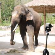 L'éléphant qui parle coréen