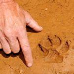 Des empreintes de 10 cm de diamètre ont été relevées. Crédit photo: capture d'écran La Provence