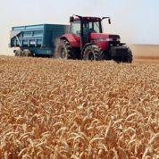 Céréales: la France dominante en Europe