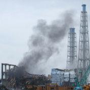 Fukushima : du césium à la cime des forêts