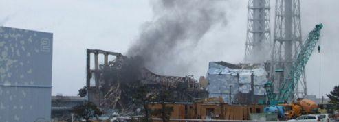 Fukushima : contamination de la cime des forêts japonaises
