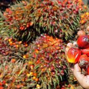 Nutella défend l'huile de palme